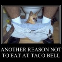 Eat on Taco Bell?