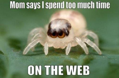 Nerd Spider