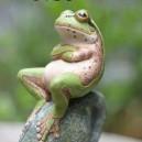 Frog Says No