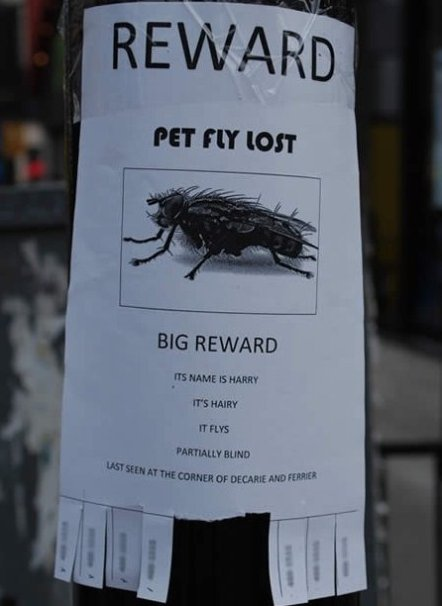 Pet Fly Lost
