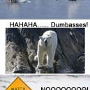 Silly Polar Bears…