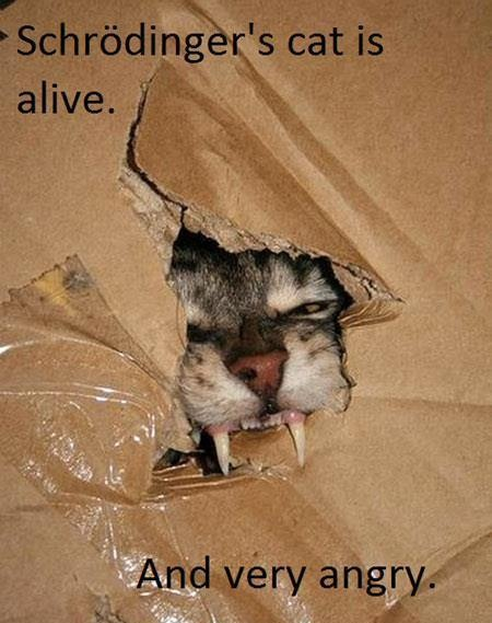 Schrödinger's Cat Is Alive!