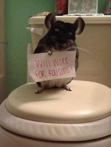 Help This Poor Little Mouse!