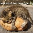I Love This Potato!