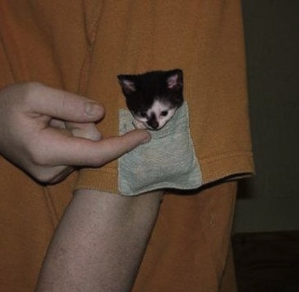 Cutest Pocket Ever