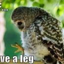 I Have a Leg? – Owl