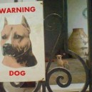 Warning For The Dog