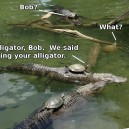 Bring Your Alligator!