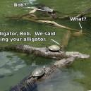 Bring Your Alligator!