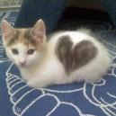 Cat With a Heart