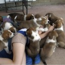 Attacked By a Pile of Cute Puppies