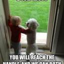 Dog, The Best Friend