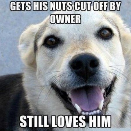 You Can Always Trust Dogs…