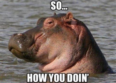 Flirting Hippo