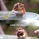 I Really Love To Sweep!