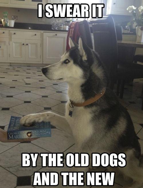 Dog Swear