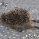 Finally, It's Friday!