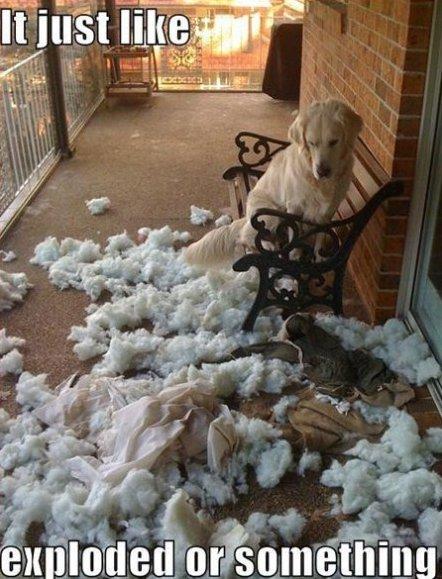 It Wasn't Me…