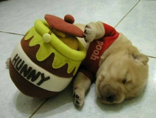 Winnie The Pooh Dog