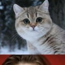 The Cat With No Emotions