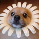I'm a Pretty Little Flower