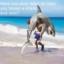 Boxed a Shark