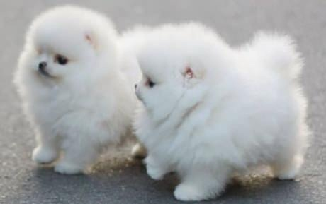 So Fluffy Little Puppies