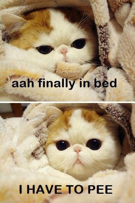 Finally in bed…