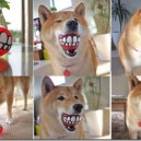 Awesome Ball For Your Dog