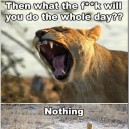 A Normal Day For The Lions…