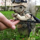 Captain Squirrel