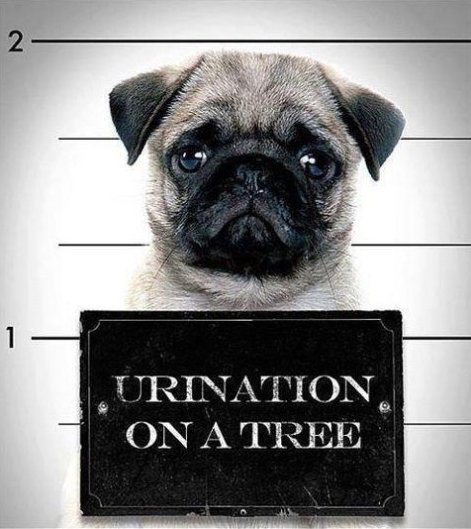 Criminal Dog
