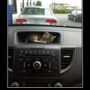 Cutest GPS ever!