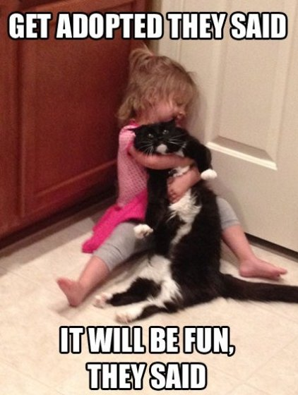 Poor Cat…