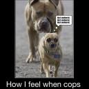 When Cops Are Around