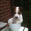 Dog in a pot