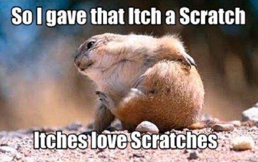 Itch a Scratch