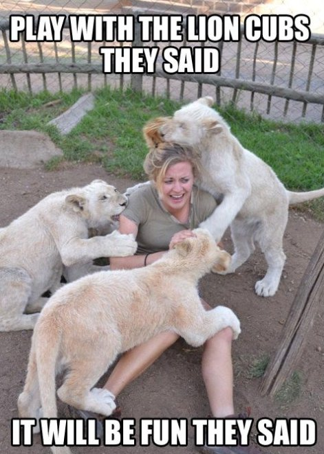 Play With They Lion Cubs They Said…