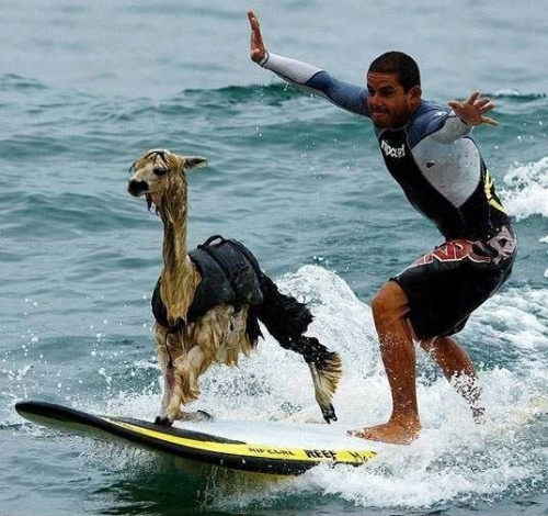 Peru, Where Alpacas Surf