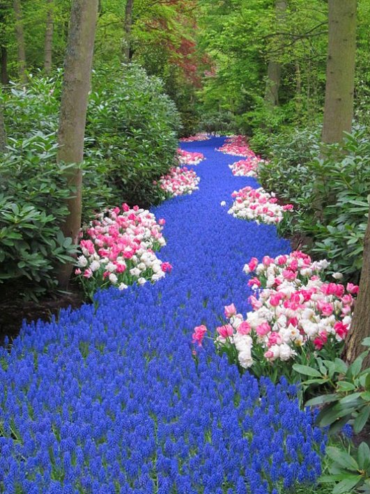 River of Flowers