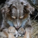 Taking Care of Baby Rabbits