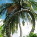 Awesome Palm Tree