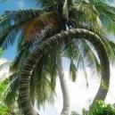 Awesome Palm Tree