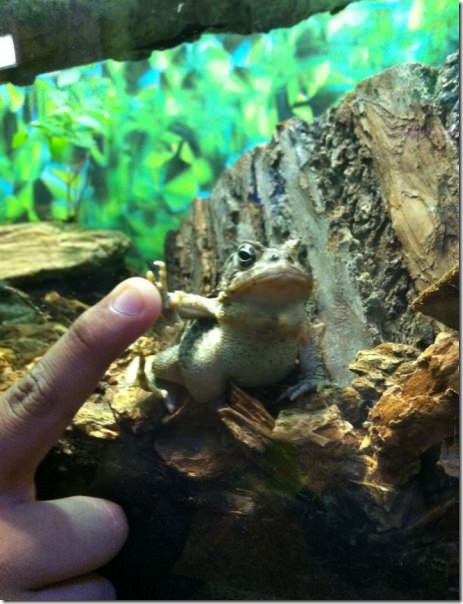 Bad Ass Frog Gives Me a High Five