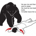Bear Logic…