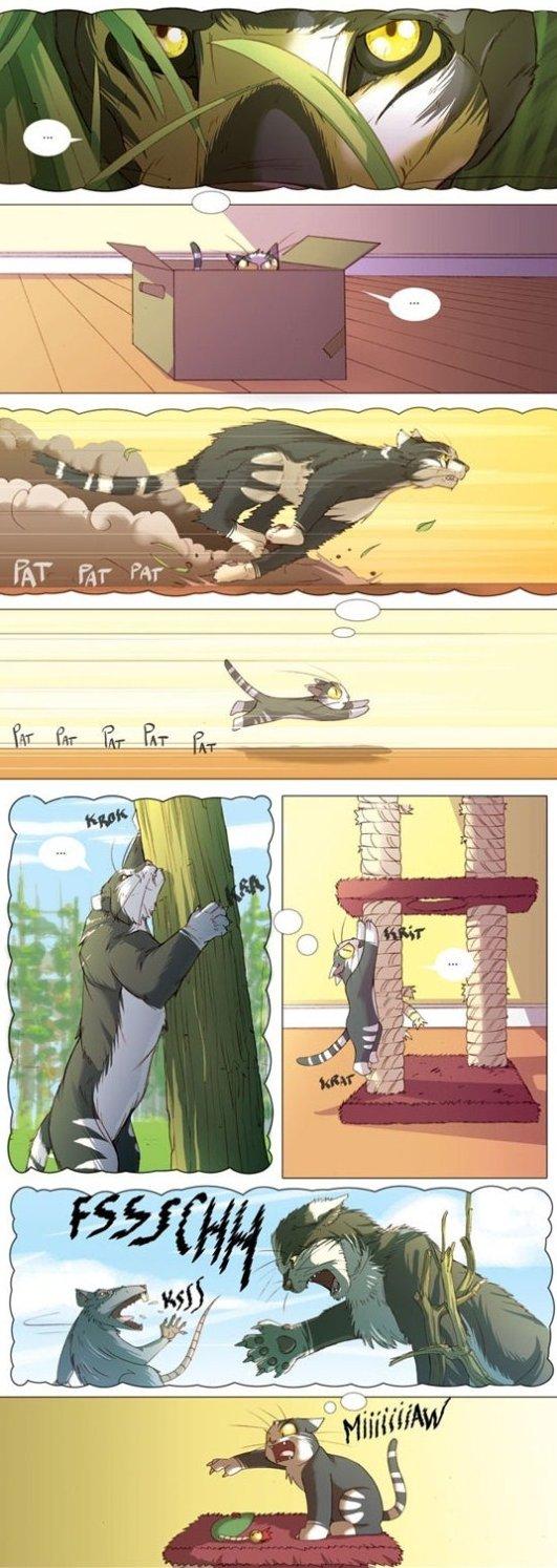 A Cats Imagination