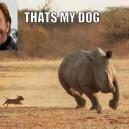 Chuck Norris Dog