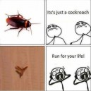 It's Just a Cockroach…