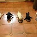 Five Little Puppies