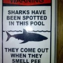 Warning! Sharks!